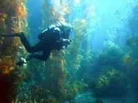 探索地中海的深度