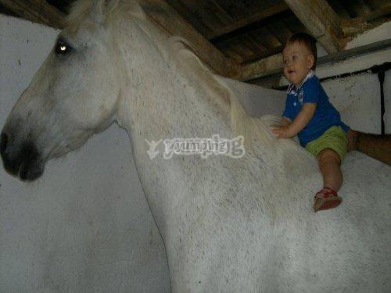 xanadu equitacion