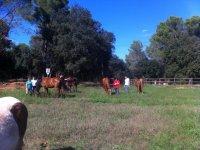 I nostri cavalli al pascolo