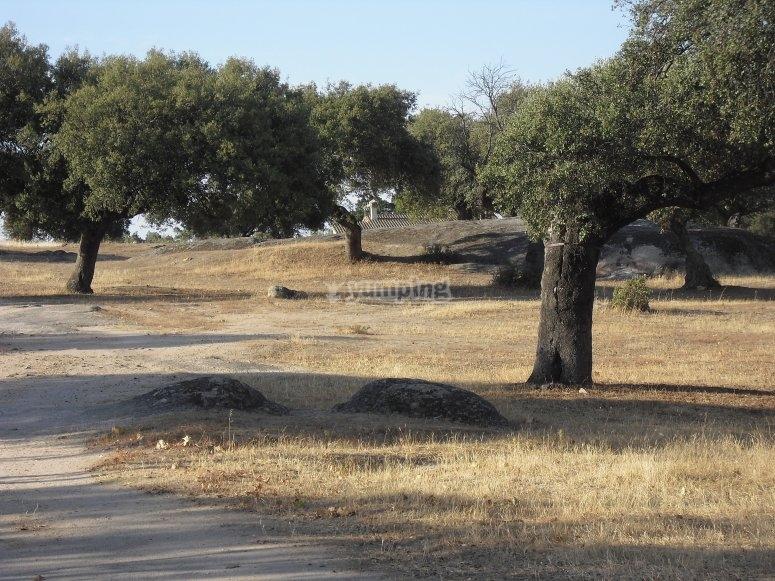 Ruta de senderismo por el campo