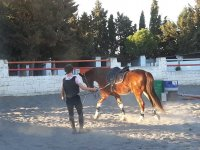 Training the horse with the track