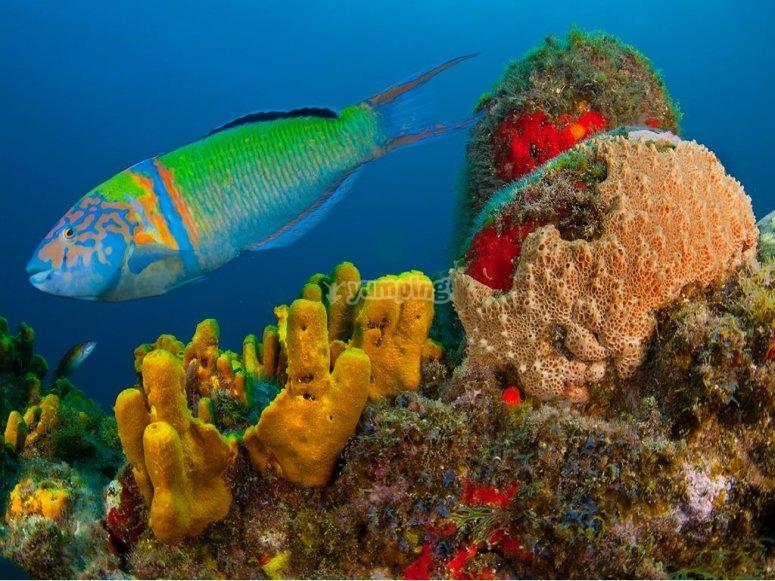 Colores y vida submarino de La Palma