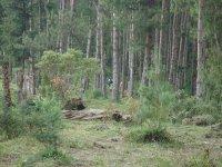 Carreras de orientación por la naturaleza en Ojo Guareña