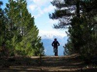 between pine forests