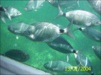 乘船路线-欣赏该地区的海洋动物