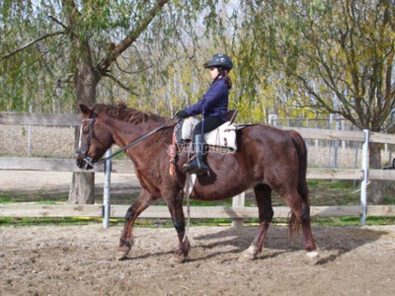 Clase intensiva de equitación