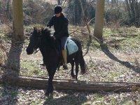 2 horas de equitación