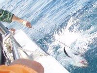 The fishing of the North bonito