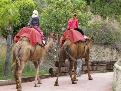 Selwo Aventura Paseos en Camello