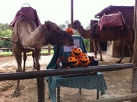 dromedarios halloween