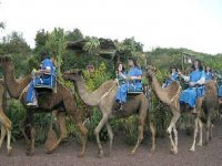 Tenerife camel excursions