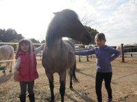 pony di classe