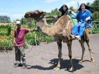 parejas en camellos tenerife