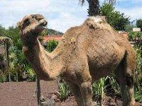parque camellos tenerife