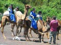 paseos en camello tenerife
