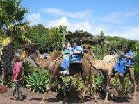 recorre en camello tenerife