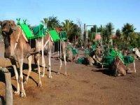 rutas en camello tenerife