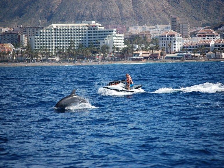 Recorrido junto a los delfines