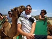温柔的吻骆驼小骆驼