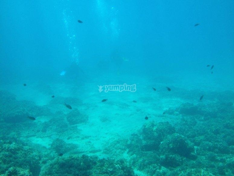 Diving in Costa Dorada