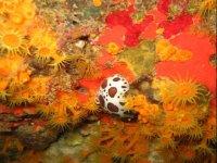 海底沉船潜水标志热风