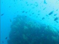 沉船潜水潜水热风中