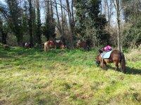小马旁边的森林