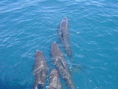 Naturexplorer Avistamiento de Cetáceos