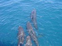 Los delfines salen a nuestro paso