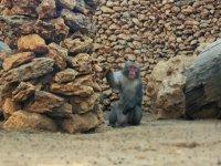 mono de las nives zoo castellar
