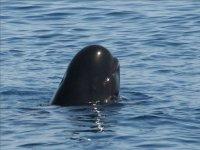 观看海洋鲸类