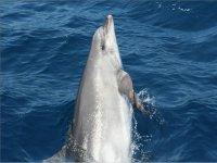 喜欢看海豚