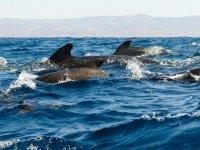 Avistamiento de cetáceos en Cádiz