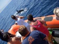 Excursiones Tarifa para ver cetáceos