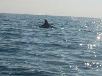 在海中接近海豚