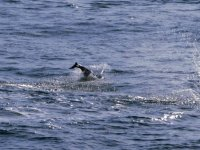Saltando en el mar