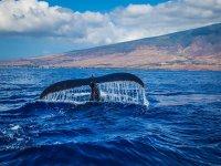 海峡中的鲸鱼直布罗陀
