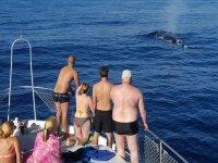 Cetaceos en el oceano canario