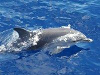 Delfin pasando junto al barco