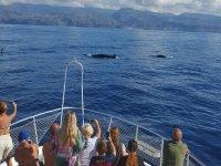Pasajeros fotografiando los cetaceos
