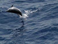 Los espectaculares saltos de los delfines