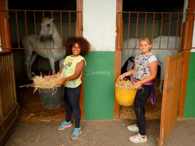 Niñas alimentando caballos en cuadra