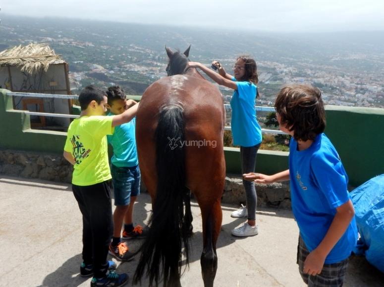 Preparando caballo