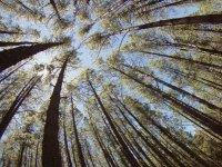 被树木包围