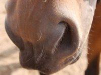 Monta a caballo en Salamanca