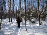 Guided routes in snowshoes