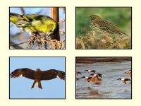 Avistamiento de pájaros