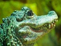 See you later crocodile