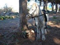 在森林里的小马