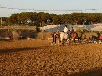 Practicando con los caballos en recinto cerrado